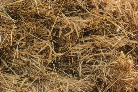 Dry yellow hay, grass background. Close up texture Standard-Bild - 90361752