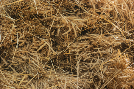 Dry yellow hay, grass background. Close up texture Standard-Bild