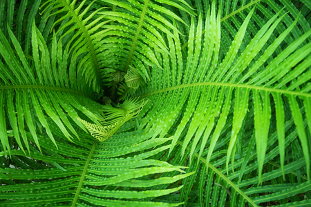 Tropical fern close-up - picture for nature background Stok Fotoğraf