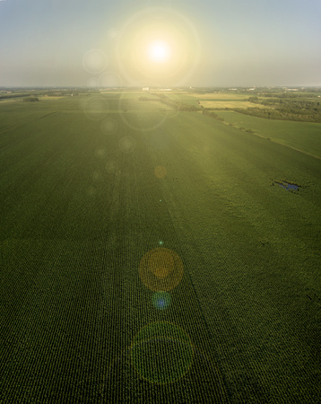 midwest: A vertical panoramic agricultural image of the sunset over a South Dakota Corn Field in the Midwest Stock Photo
