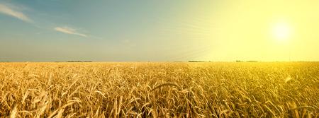 サウスダコタ小麦畑