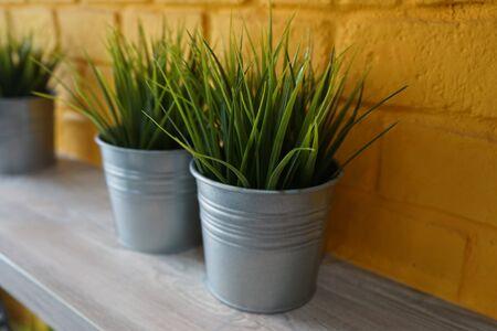 Grass in bucket 스톡 콘텐츠