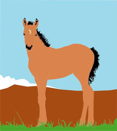 grazed: Horse grazed in mountains