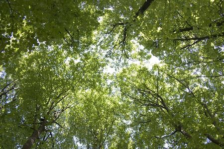 Sky kind from below through green foliage Stock Photo - 5573050