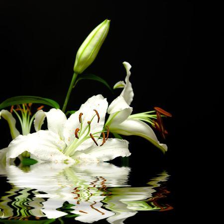 reflexion: Flores blancas, con efectos de reflexi�n en el agua sobre un fondo negro