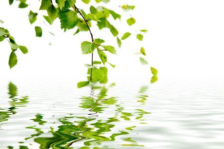 reflexion: Rama de un abedul y su reflejo en el agua