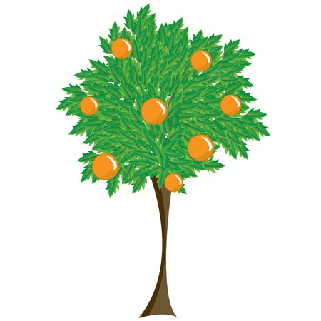 broadleaved tree: deciduous tree with orange fruit. Illustration on a white background