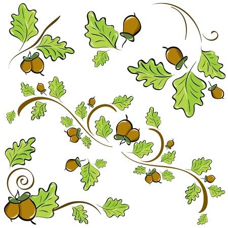 カシの葉およびドングリの飾りのセット。図  イラスト・ベクター素材