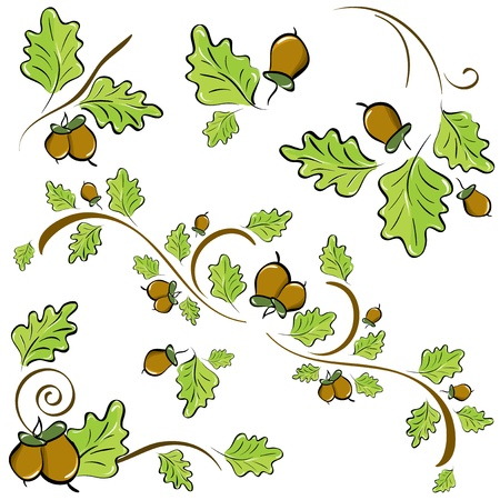 oaks: a set of ornaments made of oak leaves and acorns.  illustration Illustration