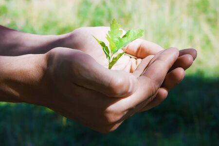 Small green tree oak in human hands