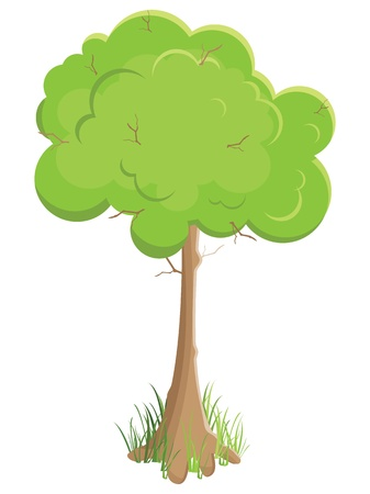 green tree. Vector illustration. Isolated on white background