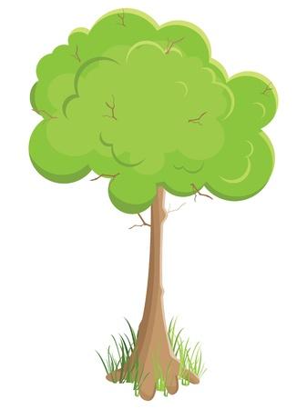 groene boom. Vectorillustratie. Geïsoleerd op witte achtergrond
