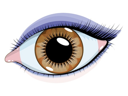 olhos castanhos: Brown eyes with makeup on a white background