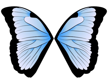 morpho: vector pair of wings blue butterfly  illustration