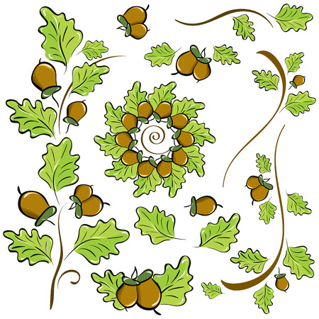 Vector set of design elements of oak leaves and acorns Vector