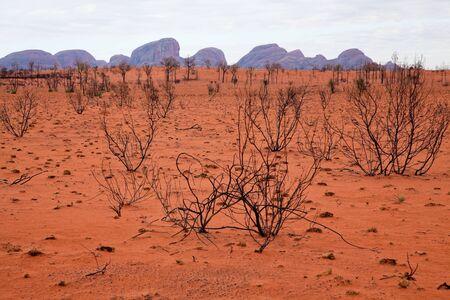 tjuta: Kata Tjuta - Ayers Rock. Aboriginal sacred place. UNESO world heritage. Desert country with Kata Tjuta on horizon.