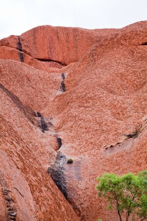 uluru: Uluru - Ayers Rock. Aboriginal sacred place. . Red sandstone rock closeup with day changing color painting. PR available - image approved for commercial use by Park authorities.