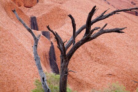 changing color: Uluru - Ayers Rock. Lugar sagrado aborigen. Arenisca roja roca de cerca con d�a cambiando la pintura del color. PR disponible - imagen aprobado para su uso comercial por parte de las autoridades del Parque. Foto de archivo