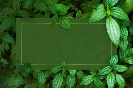 Layout creativo fatto di fiori e foglie. Vista dall'alto di foglie verdi. Disposizione piatta del concetto di natura