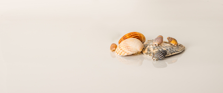 Different sea shells, large and small seashells, white background, ocean set