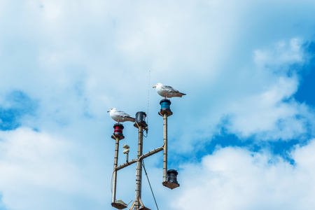 outcry: Two seagulls on the mast of the ship, in the coastal town, wild birds, blue sky and clouds, nature