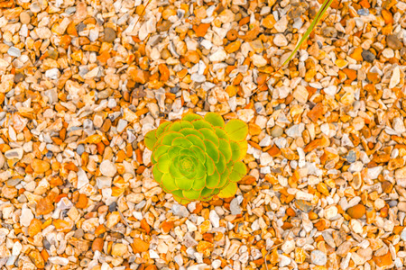 exotic plant on gravel, green leaves unusual, exotic urban greenery, flower