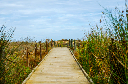 Wooden boardwalk in the dunes leading to the sandy beach, the path by the sea, plants on the dunes, tourism