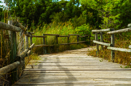 a wooden boardwalk in the dunes leading to the sandy beach, the path by the sea, plants on the dunes, tourism Stock Photo