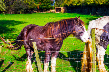 country horse grazing in a pasture, farm  fenced, rural environment, farm tourism