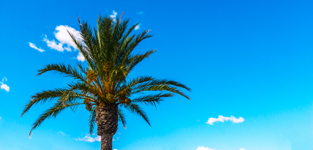 Beautiful spreading palm tree on the beach, exotic plants symbol of holidays, hot day, big leaves, exotic tree
