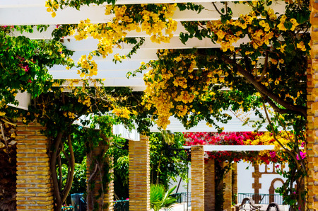 Closeup on a beautiful arbor covered with climbing plants with colorful flowers, relax place, architecture