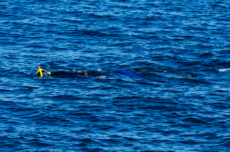Diver with a snorkel during swimming on the sea surface, active and interesting water sport, snorkeling Standard-Bild