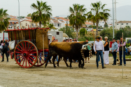 ALMAYATE, SPAIN - APRIL 21, 2018 Traditional Andalusian contest based on the presentation of the ability to drive oxen with a cart, professional work of carters with oxen, event Editorial