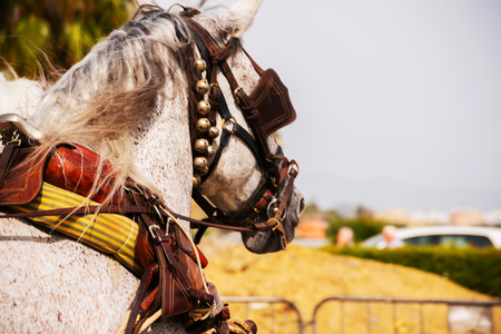 Closeup on horses in a harness during a riding show in a tourist town Stock Photo