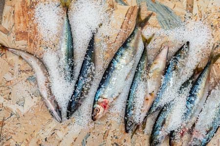 Whole raw organic mackerel fish with sea salt lying on a flat surface, healthy food Stock Photo