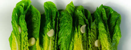 Fresh, cut romaine lettuce with garlic, pepper and salt, meal preparation