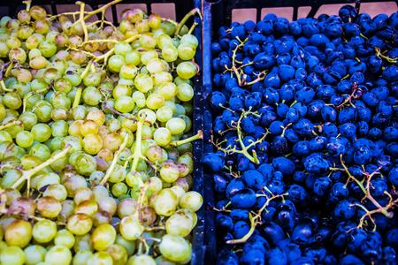 Green grapes, red grapes, dark grapes sweet grapes
