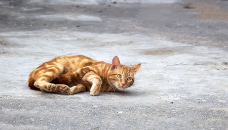 Dirty stray cats eating dry food on the sidewalk Stock Photo