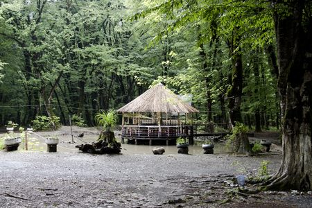 Wooden gazebo in the woods. Gazebo in the forest. Imagens