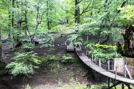 Old wooden bridge in deep forest, natural vintage background