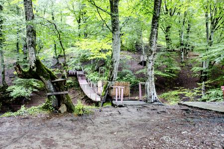 old wooden bridge in deep forest, natural vintage background Imagens