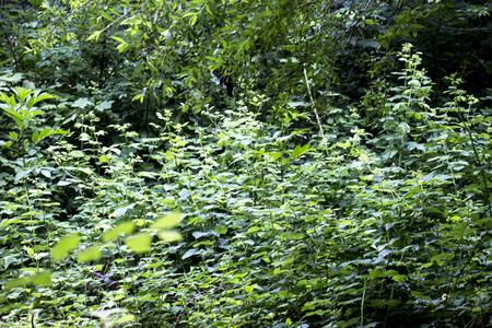 Green grass soccer field background. Background of green grass