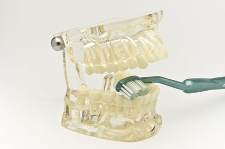 Transparent dental model with toothbrush Stock Photo - 6856240