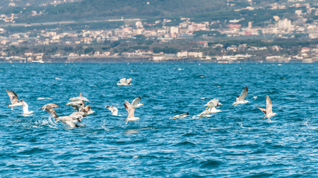 planar: Seagulls flying over expanse of sea