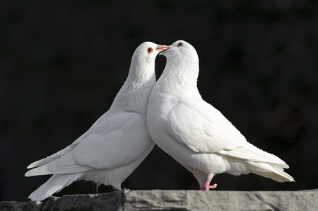 geloof hoop liefde: twee liefdevolle witte duiven