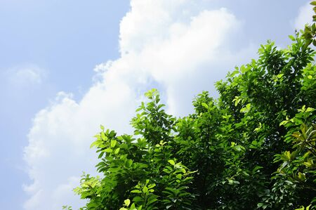 leaves and background of bluesky Stock Photo - 8455875