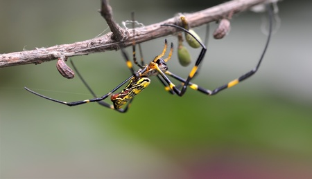 a cute spider on branch Stock Photo - 8470930