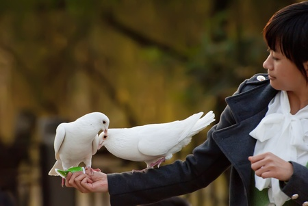 white dove and girl Stock Photo - 8478088