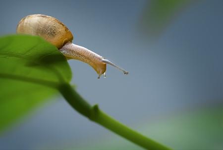 molly: snail on leaf.