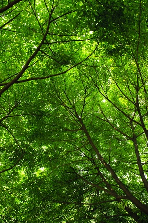 cool and refreshing under the shade of tree Stock Photo - 8592457